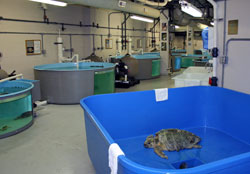 Behind-the-scenes look at a turtle hospital