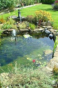 Outdoor Aquatic Turtle Habitat Turtletopia ? blog archive ...
