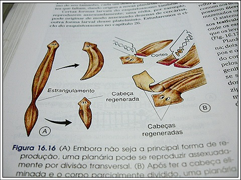 Planaria - Little White Worms - School book diagram
